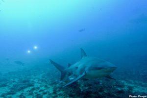 10 migliori immersioni