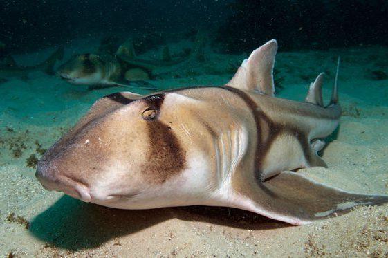 squali capivano il jazz