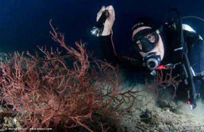prezzo delle immersioni