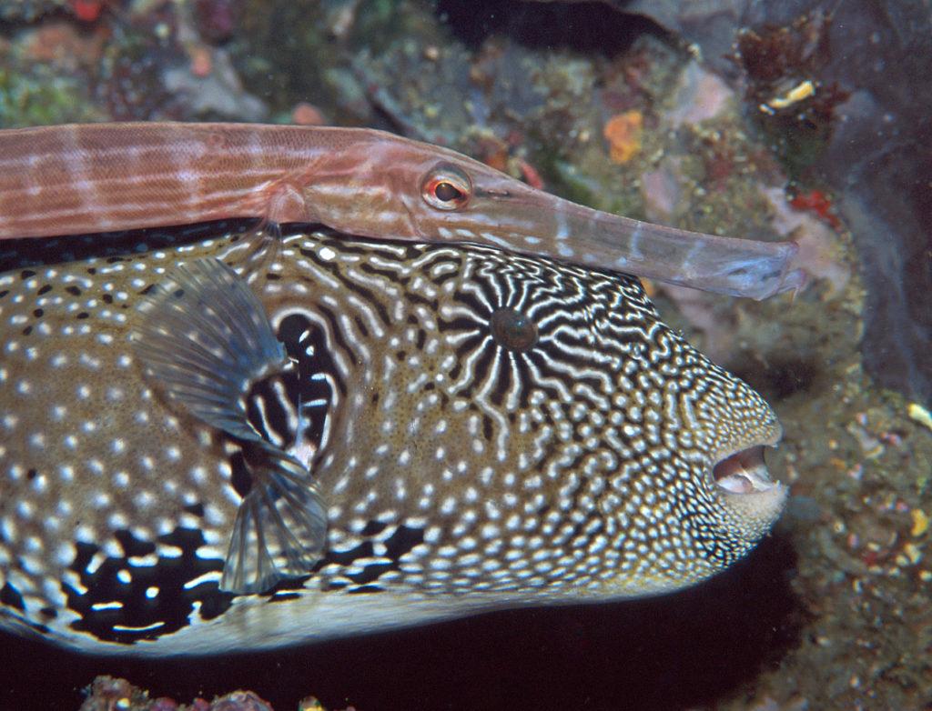 bocca dei pesci