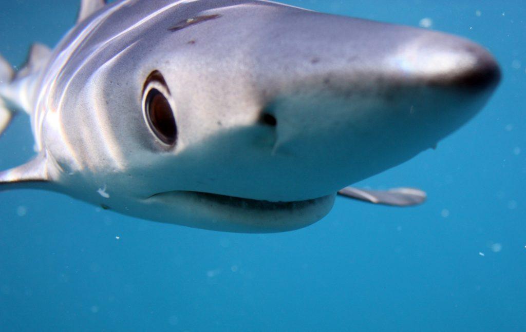 avvistamenti di squali