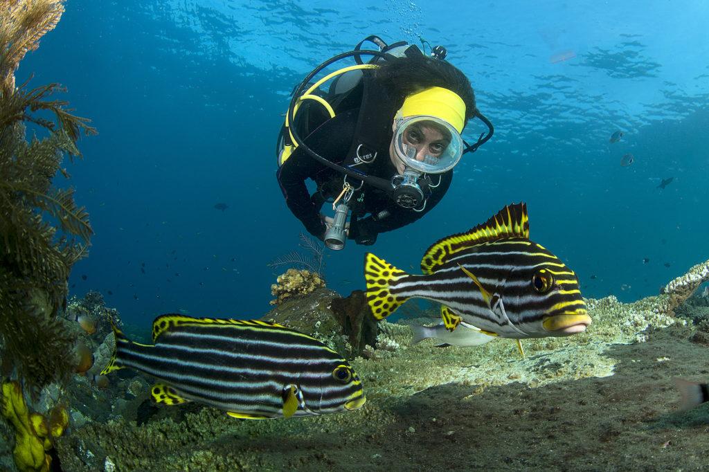 opportunità per i biologi marini