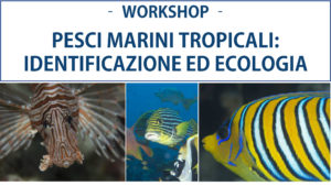 Workshop pesci marini tropicali alle Maldive @ MaRhe Center | Central Province | Maldive
