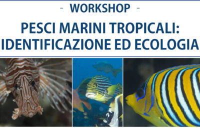 workshop pesci