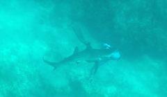 incidente con squalo