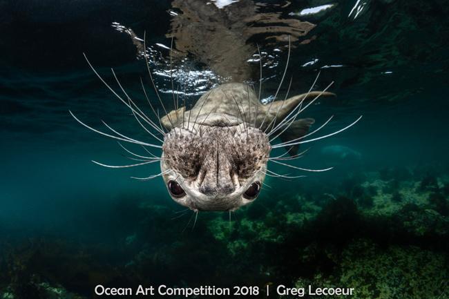 ocean art 2018