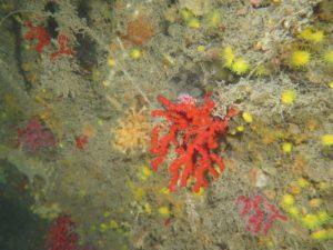 corallo a portofino