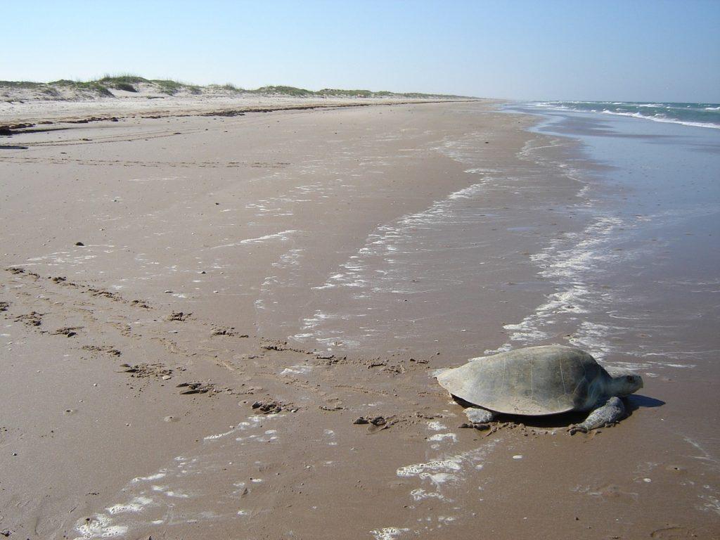 tartarughe morte