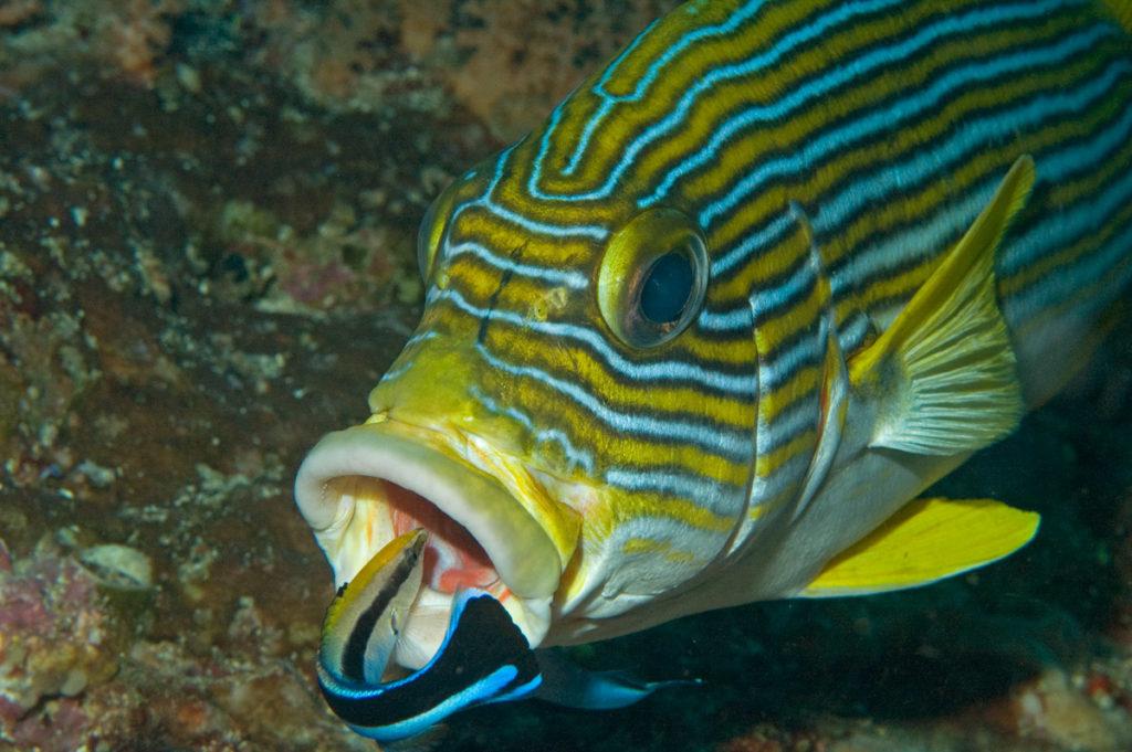 pesce intelligente