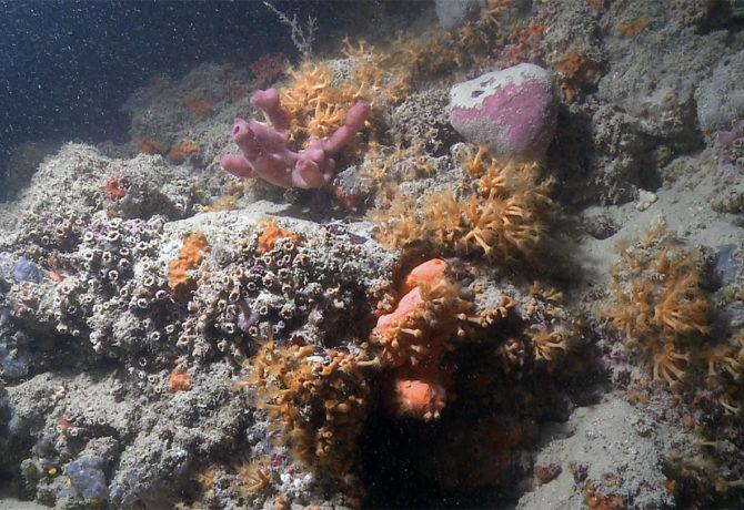 La barriera corallina più lunga del Mediterraneo