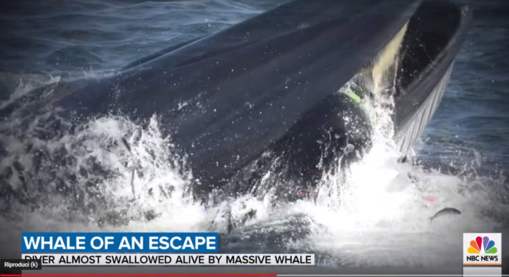 ingoiato dalla balena