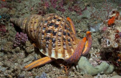 Esportazione di specie protette