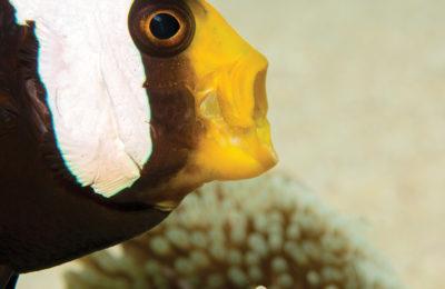 Grido di allarme del reef