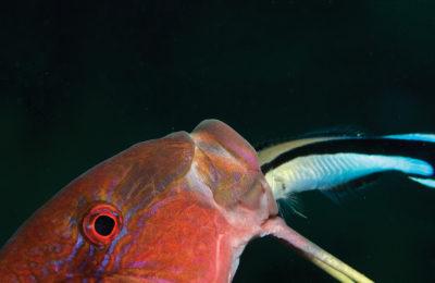 Corso di fotografia subacquea