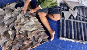 pinne di squalo