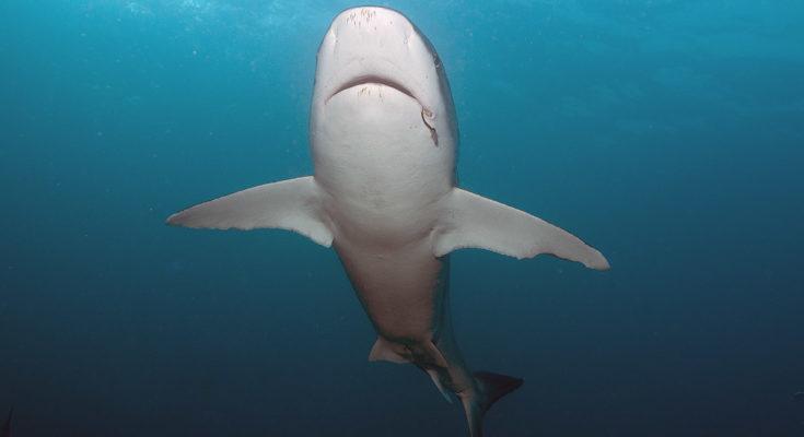 libri sugli squali