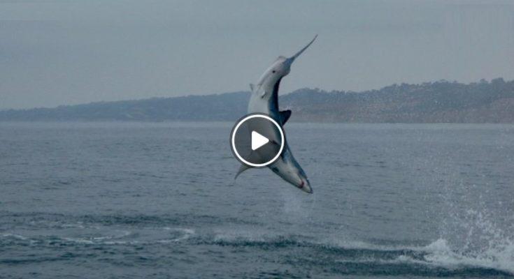 squalo che salta