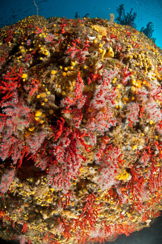 pesca di corallo