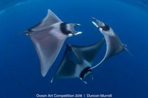 http://www.uwphotographyguide.com/ocean-art