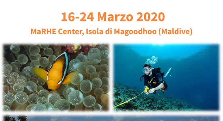 workshop pesci marini tropicali