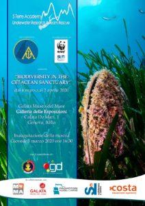 Biodiversity in Cetacean Sanctuary @ Museo del Mare Galata