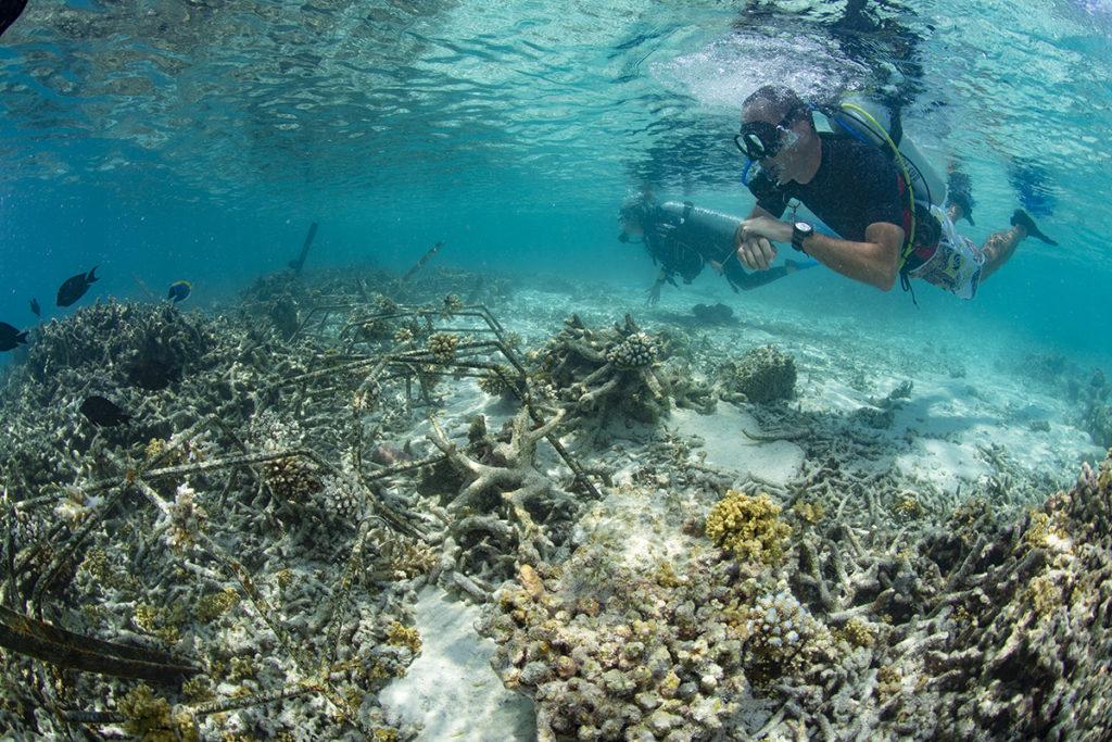 coralli delle maldive