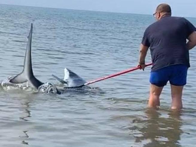 uomo salva squalo