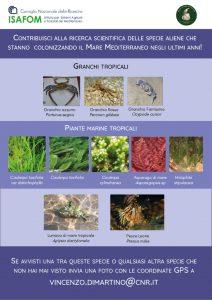 Specie Aliene in Mediterraneo