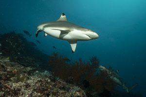 giornata mondiale dello squalo