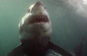 squali attaccano per sbaglio