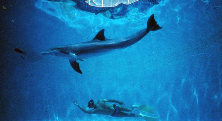 uomo delfino