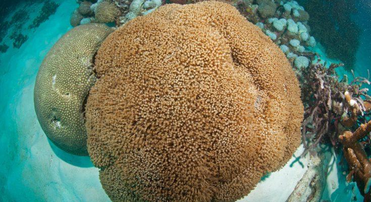Osteooporosi dei coralli