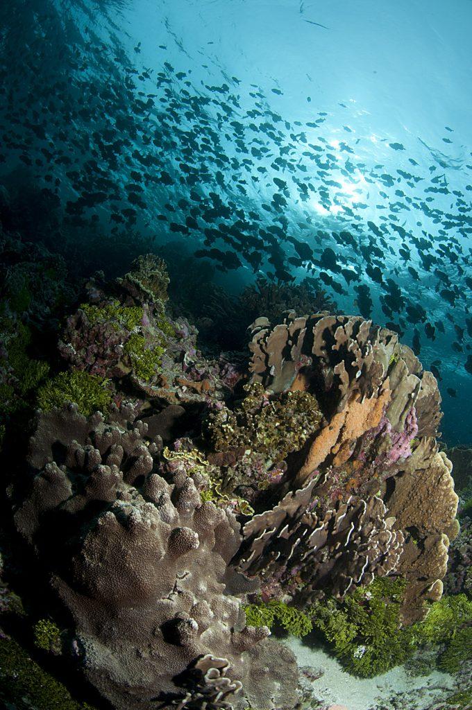 Osteporosi dei coralli