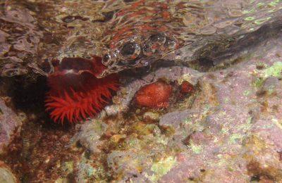 Snorkeling nel mar Ligure