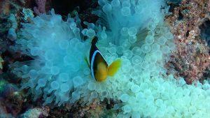 A Nemo è sbiancata la casa