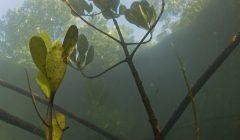 Mangrovie - dove la foresta incontra il mare