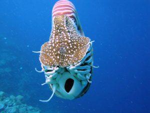 Il capitano Nemo mi deve un favore: il Nautilus