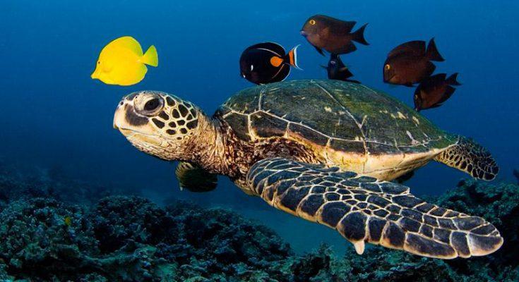 Tartarughe marine - simpatiche centenarie