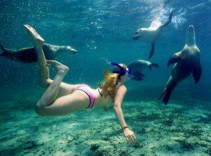 Snorkeling alle Maldive-la scoperta del mondo marino