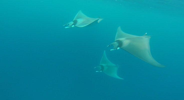 Mediterraneo…e un buongiorno alla Maldiviana