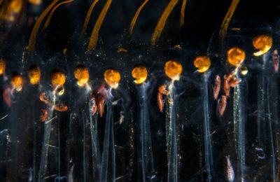 Plancton dallo spazio profondo