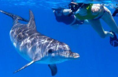 Nuotare con i delfini - incontro indimenticabile