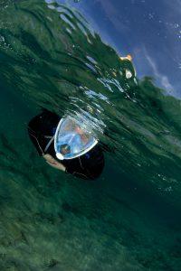 Un mare di fotografie - le storie nascoste degli animali marini
