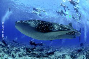 Cos'è lo snorkeling? Sport, attività o divertimento?