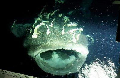 Crostata di frutta con contorno di squalo balena...