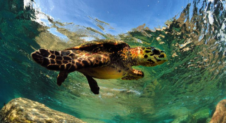 Piccoli snorkelisti crescono