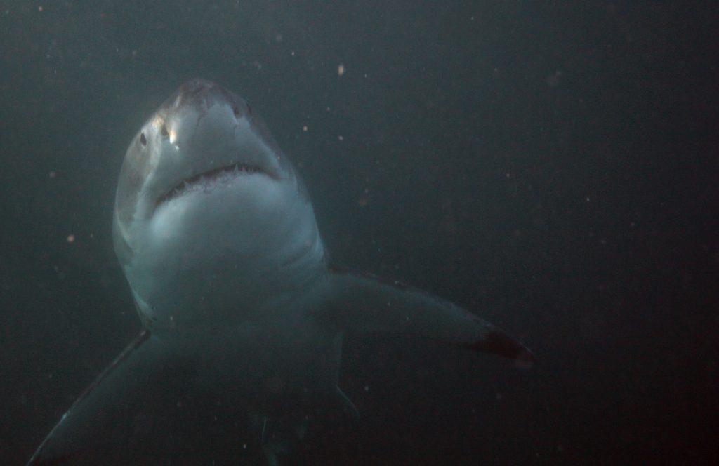 morti squalo