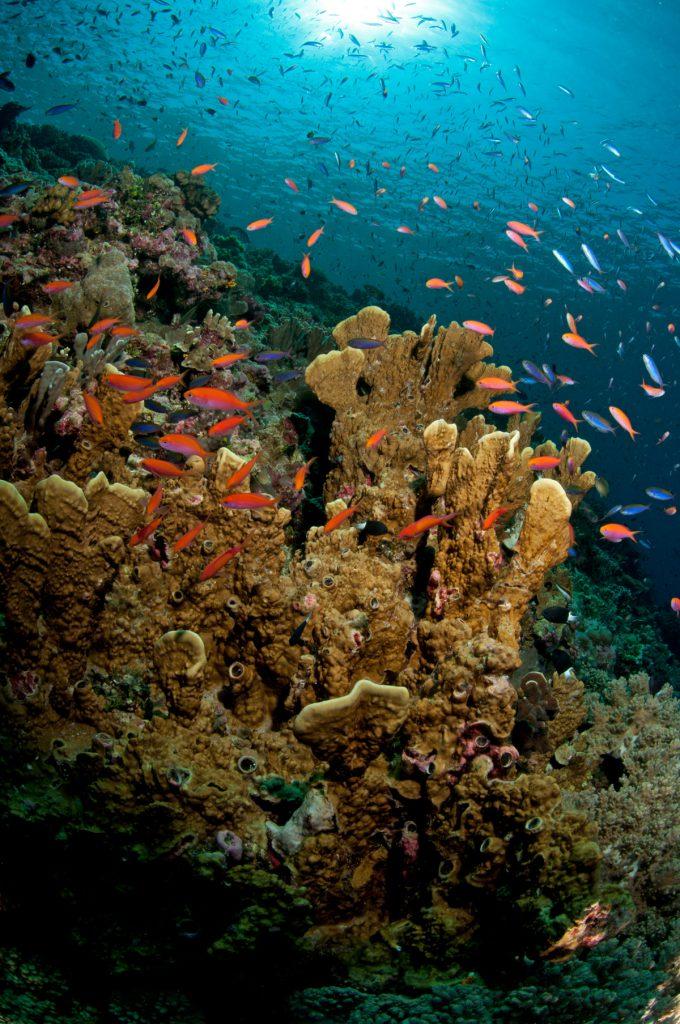reef alto 500 m
