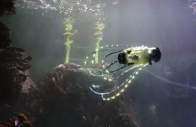 squidbot
