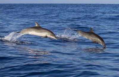 delfini rallentano i battiti